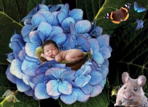Hortensia i blomsten web_edited-1